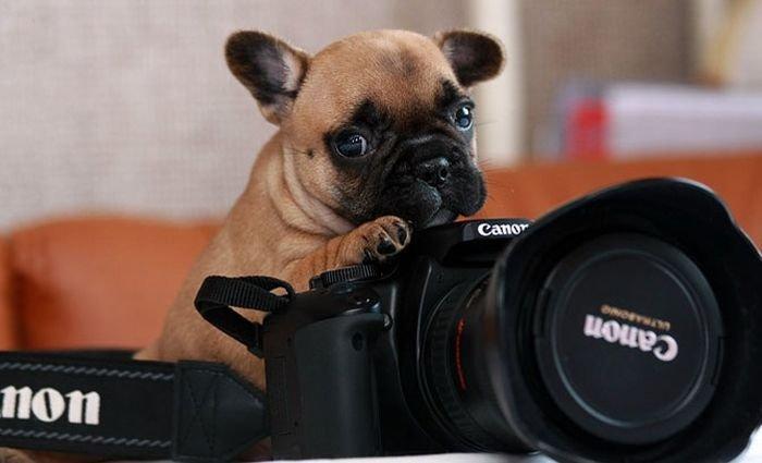 Нужен фотограф фото