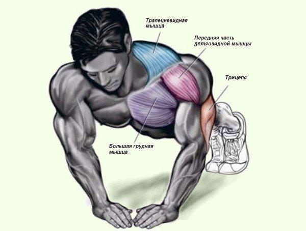 Как правильно качать грудные мышцы в домашних