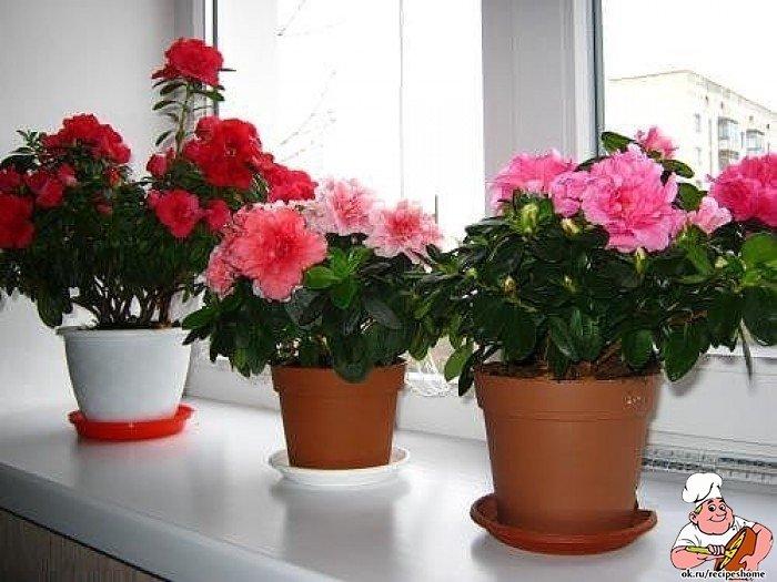 Комнатные цветы которым не нужен солнечный свет