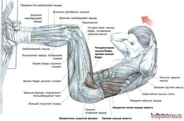 Как накачать все мышцы живота в домашних условиях 452
